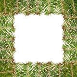 Weißes Feld gebildet vom grünen Weihnachtsbaum Stockfotos