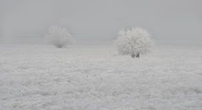 Weißes Feld mit zwei weißen Bäumen Lizenzfreie Stockfotografie