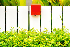 Weißes fenec Grünblatt und roter Briefkasten Lizenzfreies Stockbild