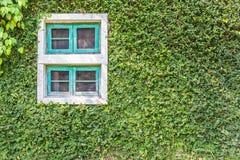 Weißes Fenster bedeckt mit grünem Efeu Lizenzfreie Stockfotografie