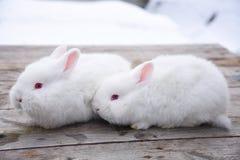 Weißes flaumiges Häschen auf einem hölzernen Hintergrund Lizenzfreies Stockfoto