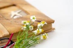 Weißes Gänseblümchen, Fotoalbum auf weißem Hintergrund lizenzfreies stockbild