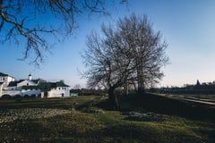 Weißes Gebäude im Garten mit Baum Lizenzfreies Stockbild