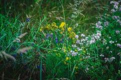Weißes, gelbes, lila, rosa Wiesengras auf einem Sommergebiet Mehrfarbige medizinische Kräuter auf einem Landgebiet Makro Weicher  stockfoto