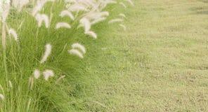 Weißes Grasblumenfeld Stockfotografie