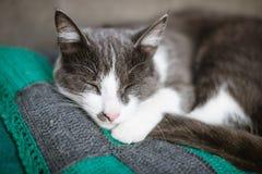 Weißes graues Schlafen der schwarzen Katze Lizenzfreies Stockbild