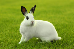 Weißes Häschen draußen im Gras Stockfoto