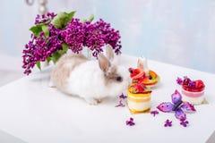 Weißes Häschen mit einer roten Stelle und einem kleinen Kuchen Blumenstrauß der Flieder im Hintergrund Stockfotografie