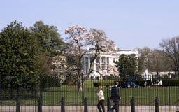 Weißes Haus im Frühjahr Stockbild