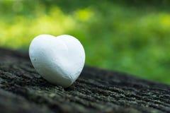 Weißes Herz auf Natur Lizenzfreie Stockfotografie