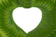 Weißes Herz mit grünen Blättern Stockbild