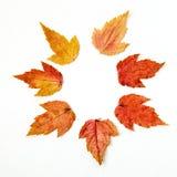Weißes Hintergrundmuster des trockenen mehrfarbigen Herbstlaubmusters Lizenzfreies Stockbild