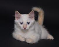 Weißes Kätzchen stockfotografie