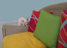 Weißes Kätzchen auf einem geflochtenen Stuhl mit Kissen Lizenzfreies Stockbild