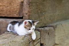 Weißes Kätzchen, das auf dem Portal sitzt stockbild