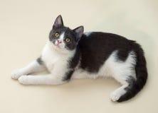 Weißes Kätzchen mit den grauen Stellen, die auf Gelb liegen Stockfotos