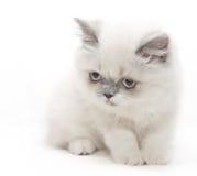 Weißes Kätzchen schaut unten lizenzfreies stockbild