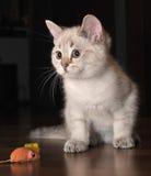 Weißes Kätzchen und eine Maus Stockfoto