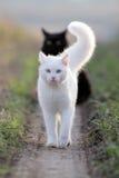 Weißes Kätzchen und Schwarzes Lizenzfreie Stockbilder