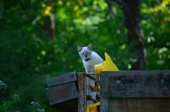 Weißes Kätzchendurchdringen untersucht den Abstand Lizenzfreies Stockfoto