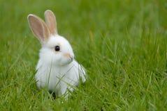 Weißes Kaninchen Lizenzfreie Stockfotos