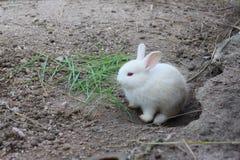 Weißes Kaninchen Stockfotos
