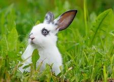 Weißes Kaninchen auf dem Rasen Stockfotos