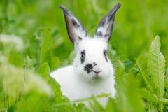Weißes Kaninchen auf dem Rasen Lizenzfreie Stockfotos