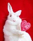 Weißes Kaninchen auf dem Rot, das einen Herz-förmigen Lutscher hält Lizenzfreie Stockfotos