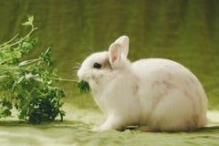 Weißes Kaninchen auf grünem Hintergrund lizenzfreies stockbild