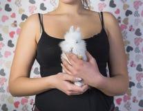 Weißes Kaninchen in den Frauenhänden Lizenzfreies Stockfoto