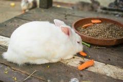 Weißes Kaninchen des kleinen Babys mit einer hölzernen Tabelle der Karotte im Bauernhof Stockfoto