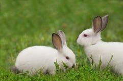 Weißes Kaninchen des Schätzchens im Gras Stockbild