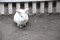 Weißes Kaninchen ein nettes Tier im Bauernhof Kleines Kaninchen Lizenzfreie Stockfotos