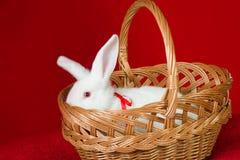 Weißes Kaninchen in einem Korb Lizenzfreie Stockbilder