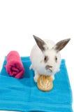 Weißes Kaninchen hält einen Pinsel auf einem blauen Tuch an Lizenzfreies Stockbild