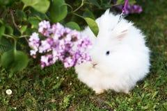 Weißes Kaninchen hinter Blumen stockbild