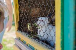 Weißes Kaninchen im Zoo Lizenzfreie Stockfotos