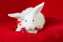 Weißes Kaninchen mit einer Fliege Stockfotografie