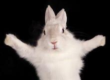 Weißes Kaninchen mit geöffneten Auflagen lizenzfreie stockfotos