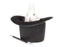 Weißes Kaninchen mit schwarzem Spitzenhut Lizenzfreies Stockbild