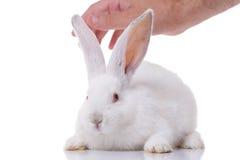 Weißes Kaninchen und eine Hand Lizenzfreie Stockbilder