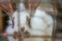 Weißes Kaninchen unter den Bäumen lizenzfreies stockfoto
