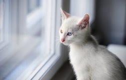 Weißes Katzenfenster Stockbild