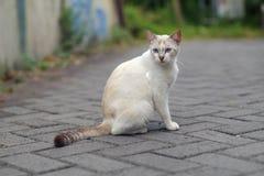 Weißes Katzenschauen Stockbild