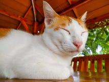 Weißes Katzeschlafen Stockfoto