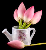 Weißes keramisches watercan, Berieselungsanlage, mit rosa Lotos, Seeroseblumen, Abschluss oben Lizenzfreie Stockfotos