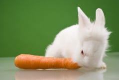 Weißes kleines Kaninchen lizenzfreie stockfotografie