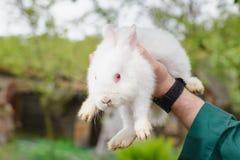 Weißes kleines Kaninchen in der Hand Stockfotografie