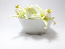 Weißes Kronenblumenblühen lizenzfreie stockfotografie